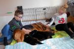 Vores børnebørn hygger med hvalpene