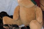 Hygge med bamsen